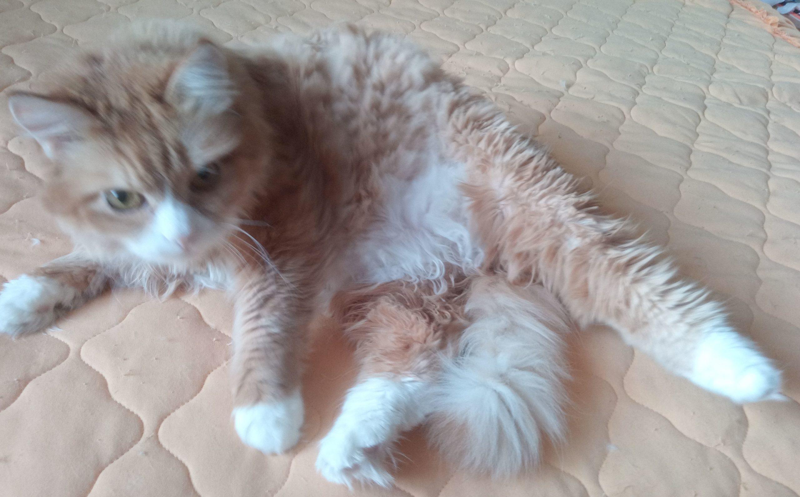 Как мой пушистый рыжий кот принимал витамины и похудел