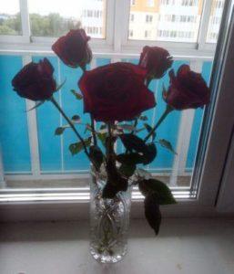Красивые розы разных цветов - розы от любимого