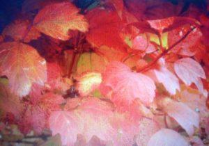 Бульденеж осенью