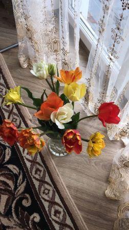 Цветы тюльпаны в саду у сестры прекрасный букет